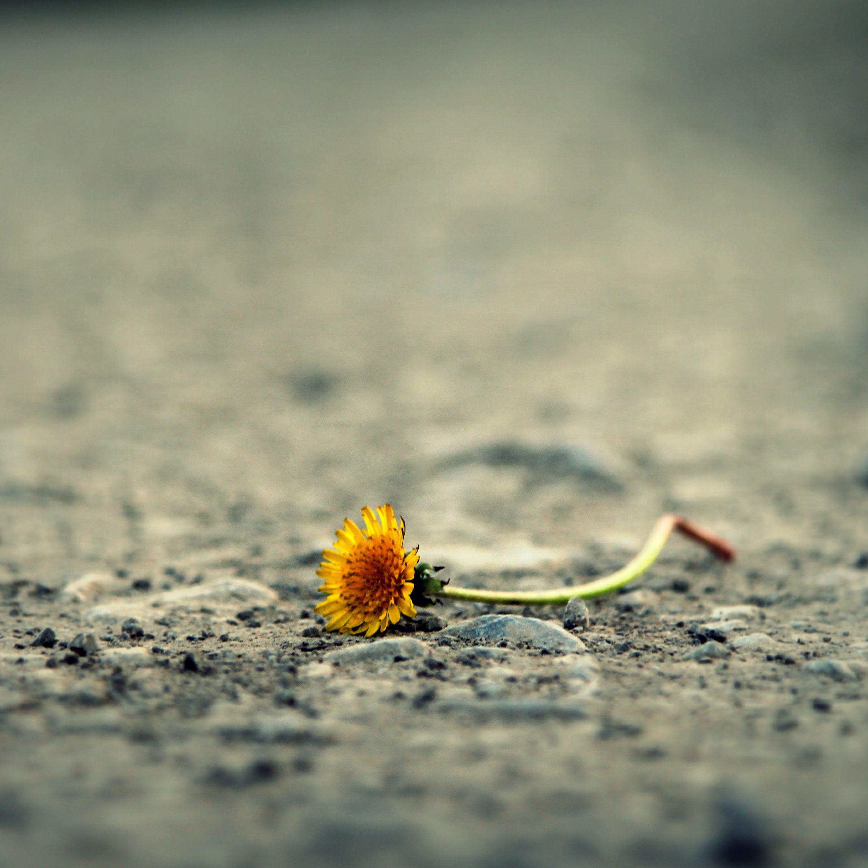 Sorg til glæde